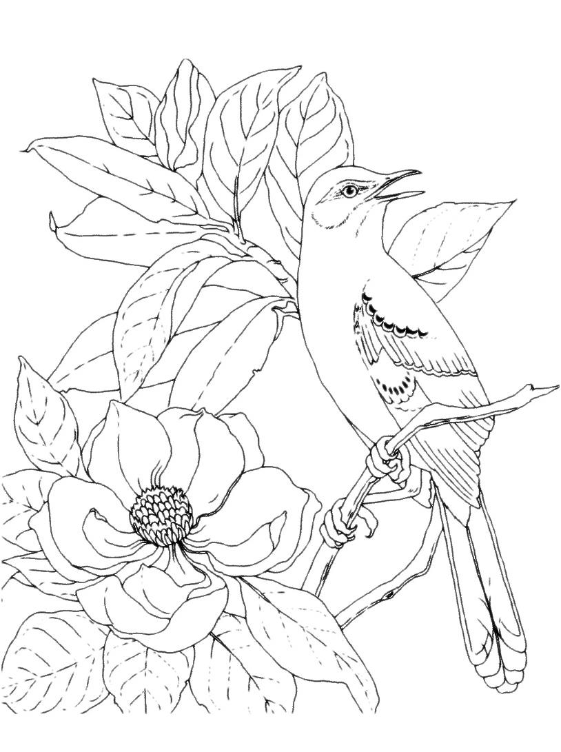 Uccello da colorare 52