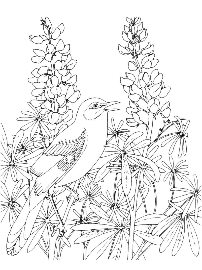 Uccello da colorare 53