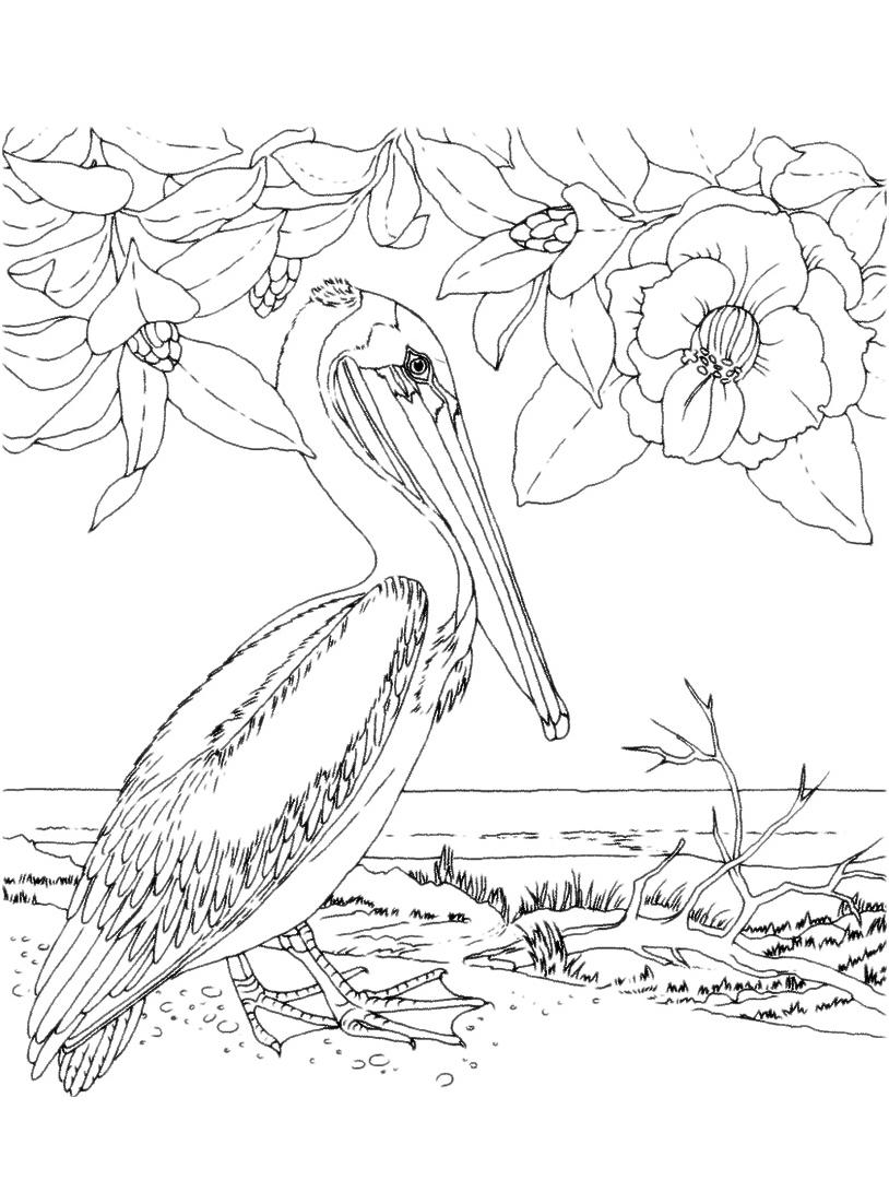 Uccello da colorare 57