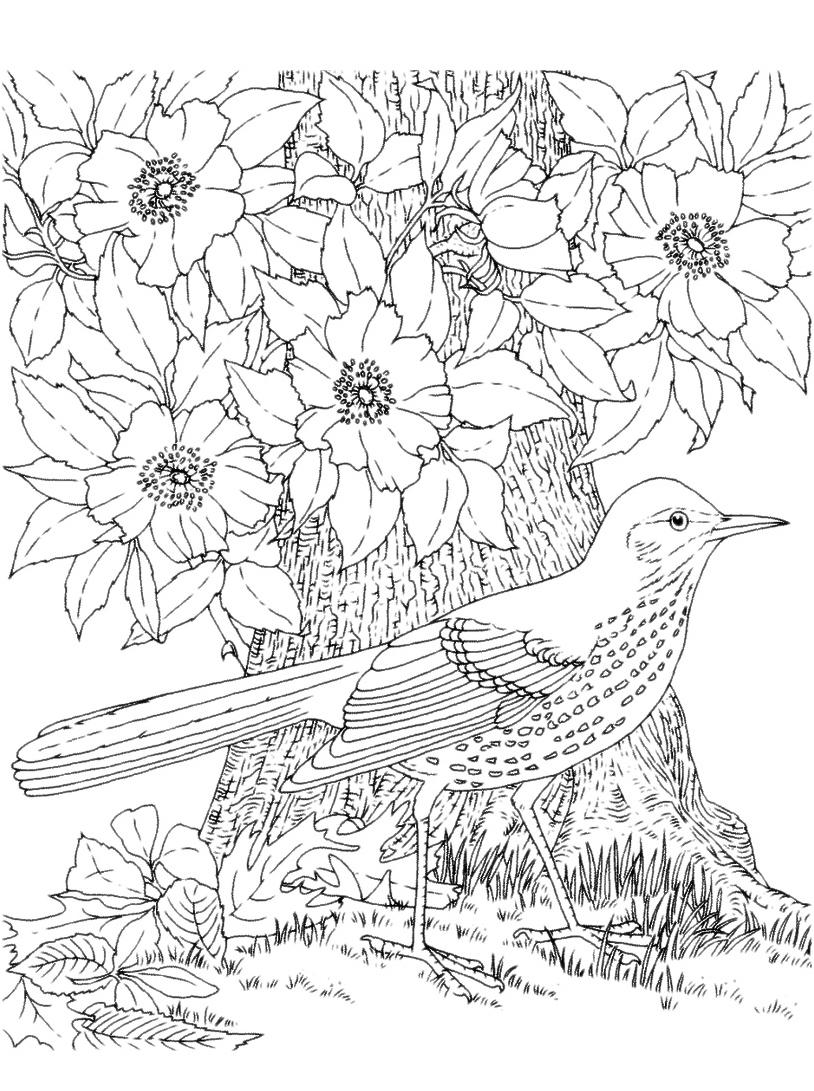 Uccello da colorare 58
