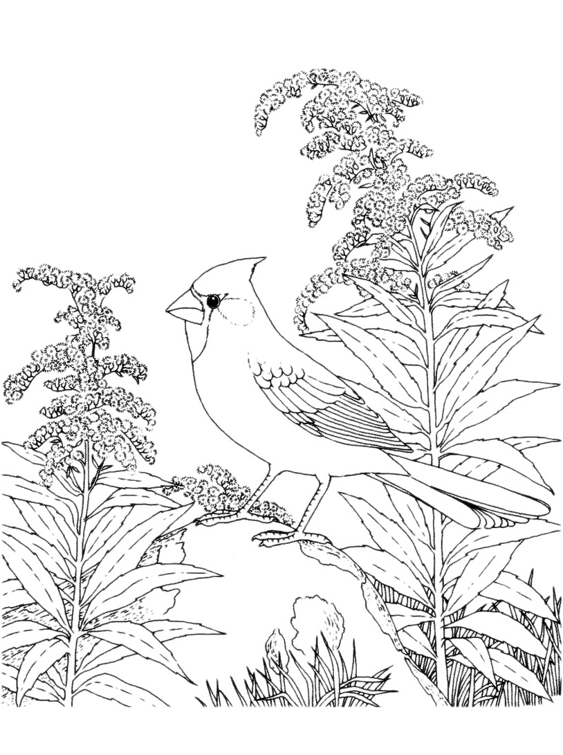 Uccello da colorare 60