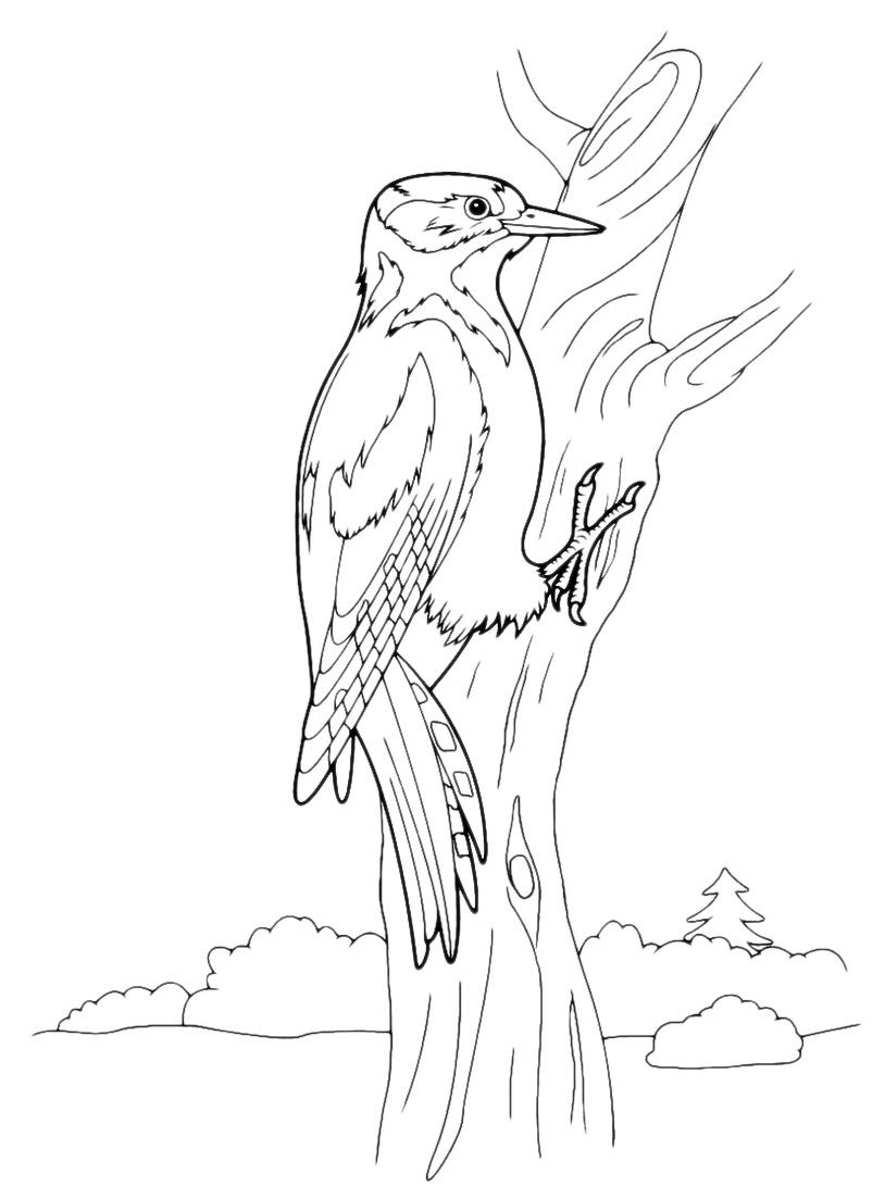 Uccello da colorare 62
