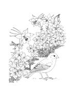 Uccello da colorare 63