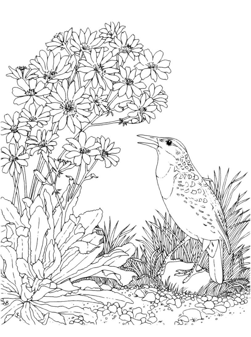 Uccello da colorare 64