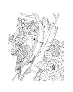 Uccello da colorare 65