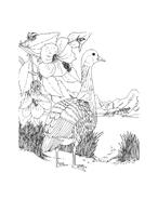 Uccello da colorare 66