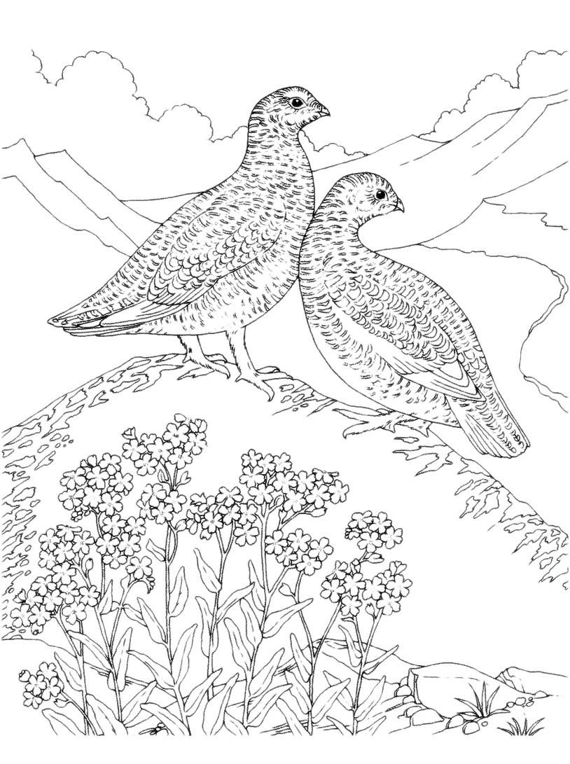 Uccello da colorare 67