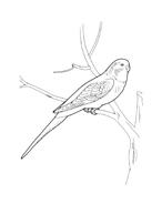 Uccello da colorare 68