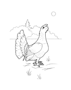 Uccello da colorare 71