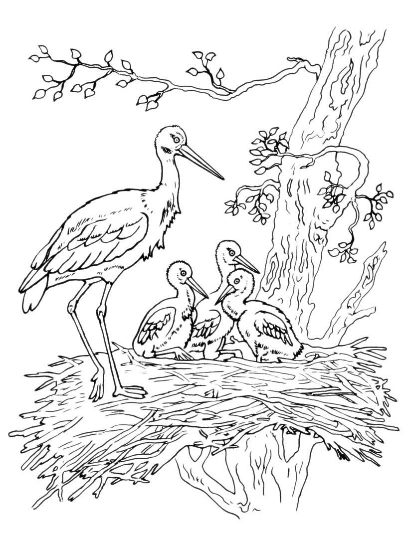 Uccello da colorare 72