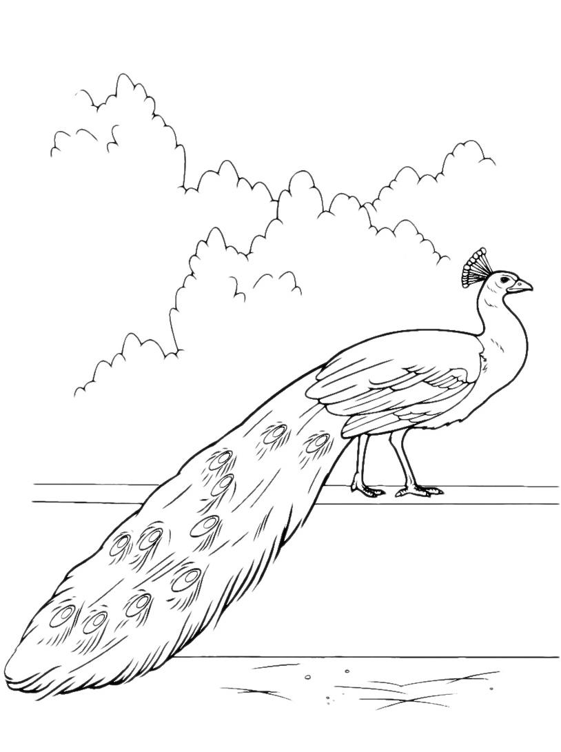 Uccello da colorare 73