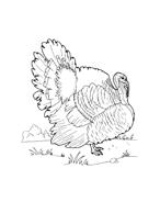 Uccello da colorare 74