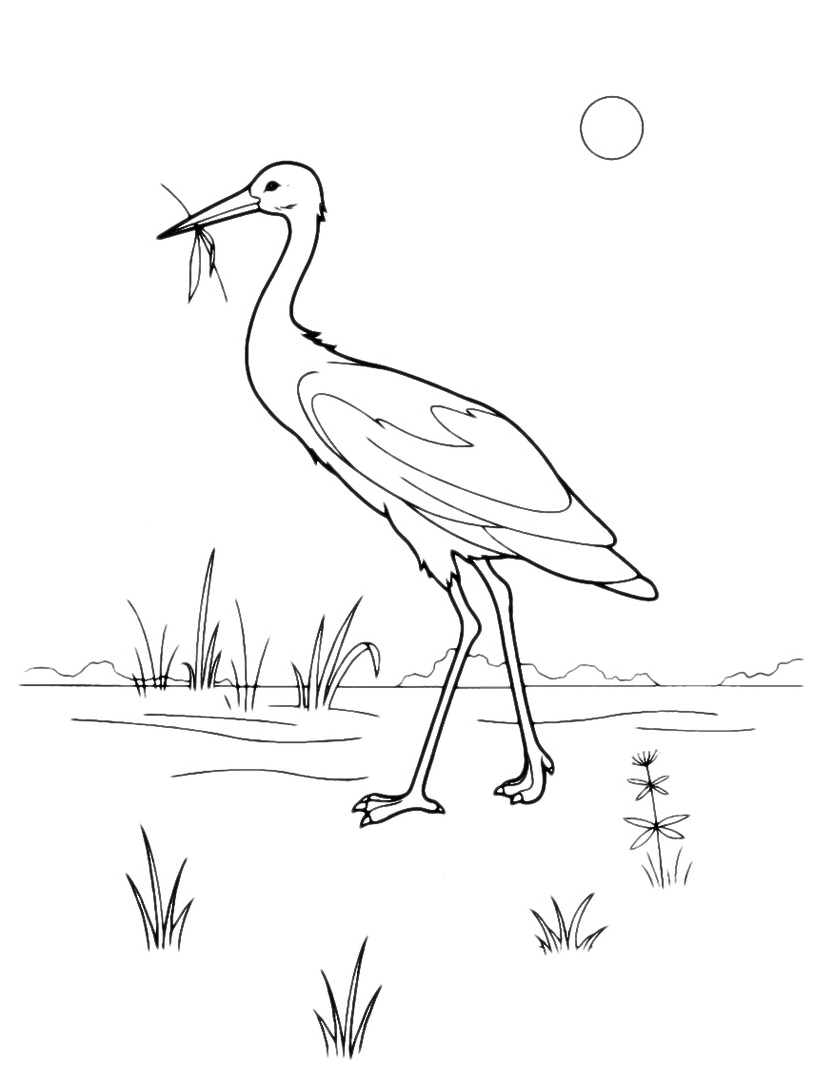 Uccello da colorare 75