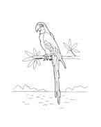 Uccello da colorare 76