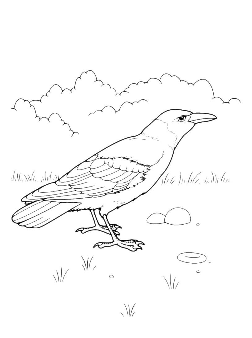 Uccello da colorare 77
