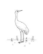 Uccello da colorare 78
