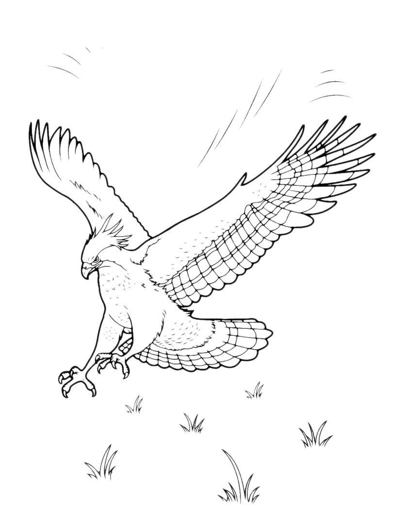 Uccello da colorare 79