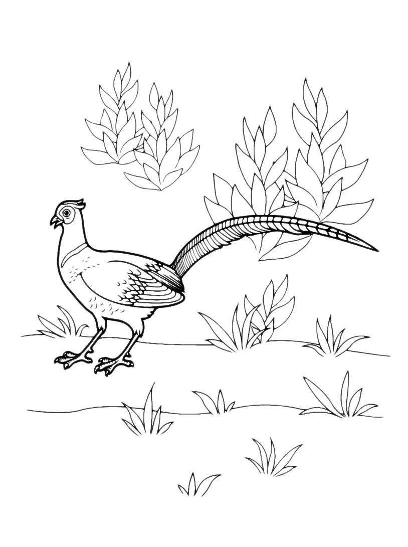 Uccello da colorare 80