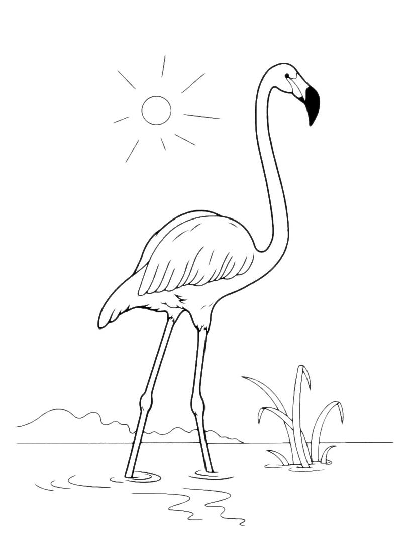 Uccello da colorare 81