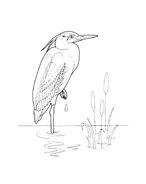 Uccello da colorare 82