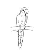 Uccello da colorare 85
