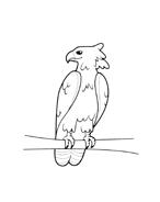 Uccello da colorare 87