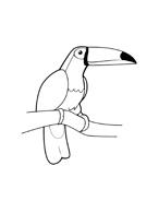 Uccello da colorare 89