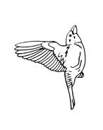 Uccello da colorare 96