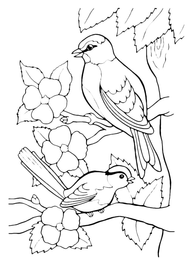Uccello da colorare 98