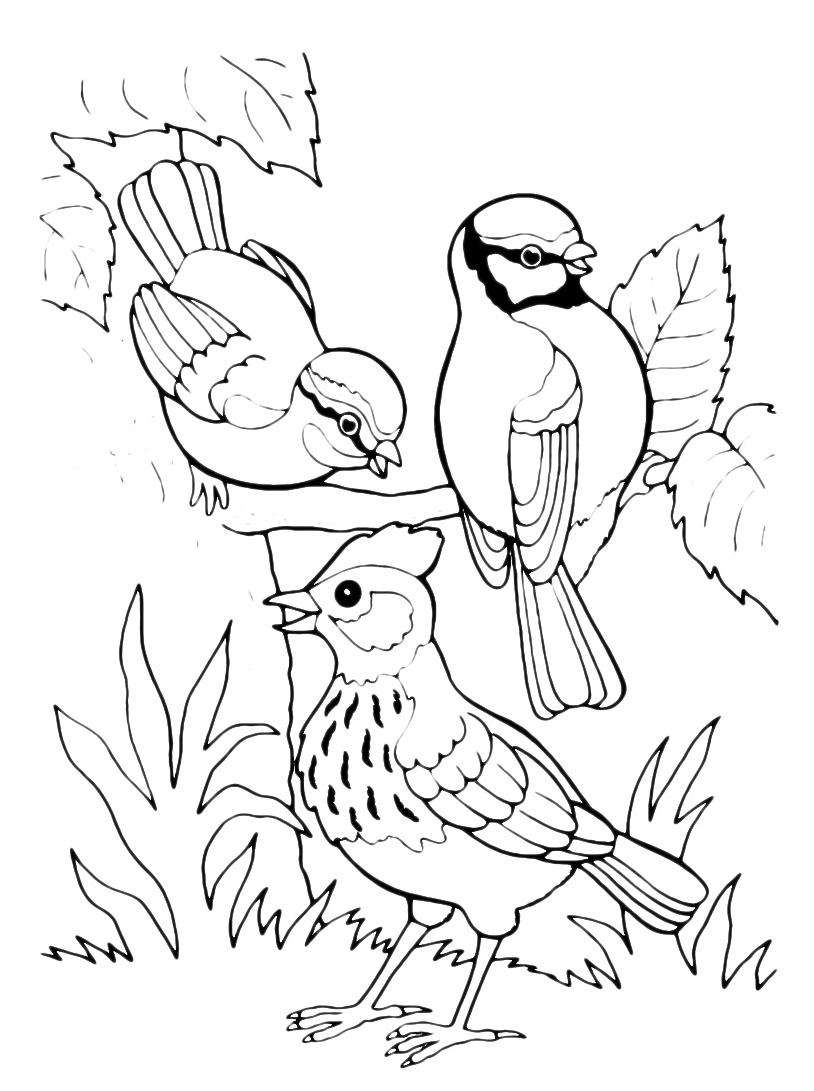 Uccello da colorare 99
