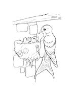 Uccello da colorare 100