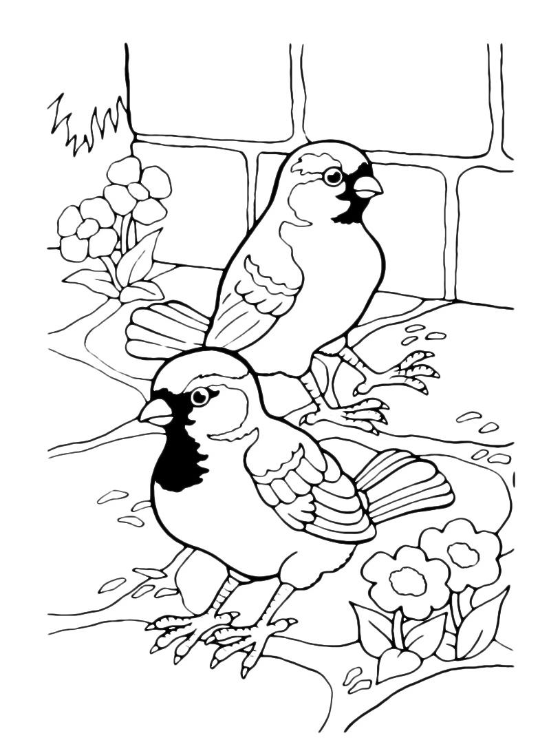 Uccello da colorare 101