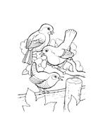 Uccello da colorare 102