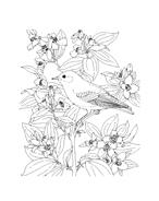 Uccello da colorare 106