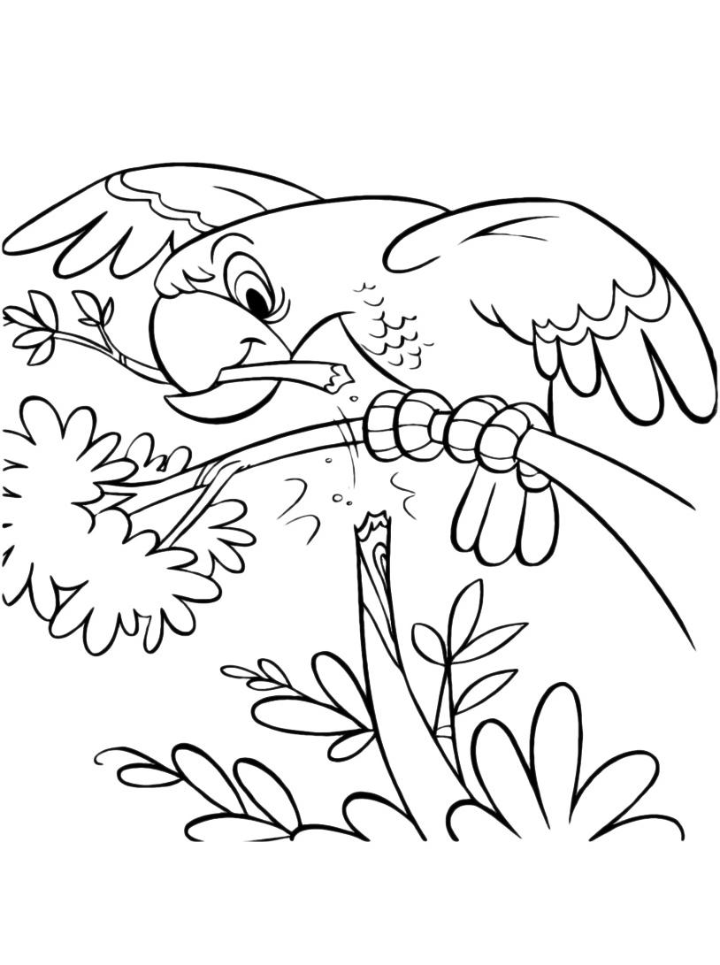 Uccello da colorare 111