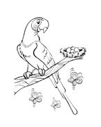 Uccello da colorare 112