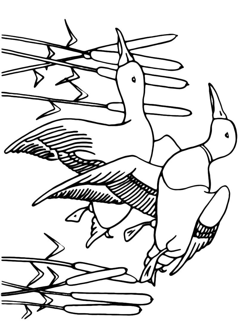 Uccello da colorare 113