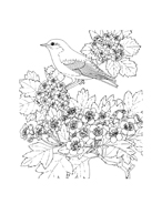 Uccello da colorare 117