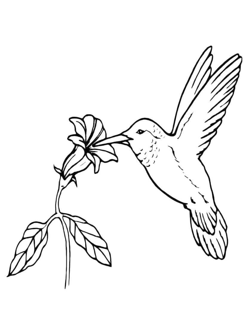 Uccello da colorare 118