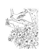 Uccello da colorare 119