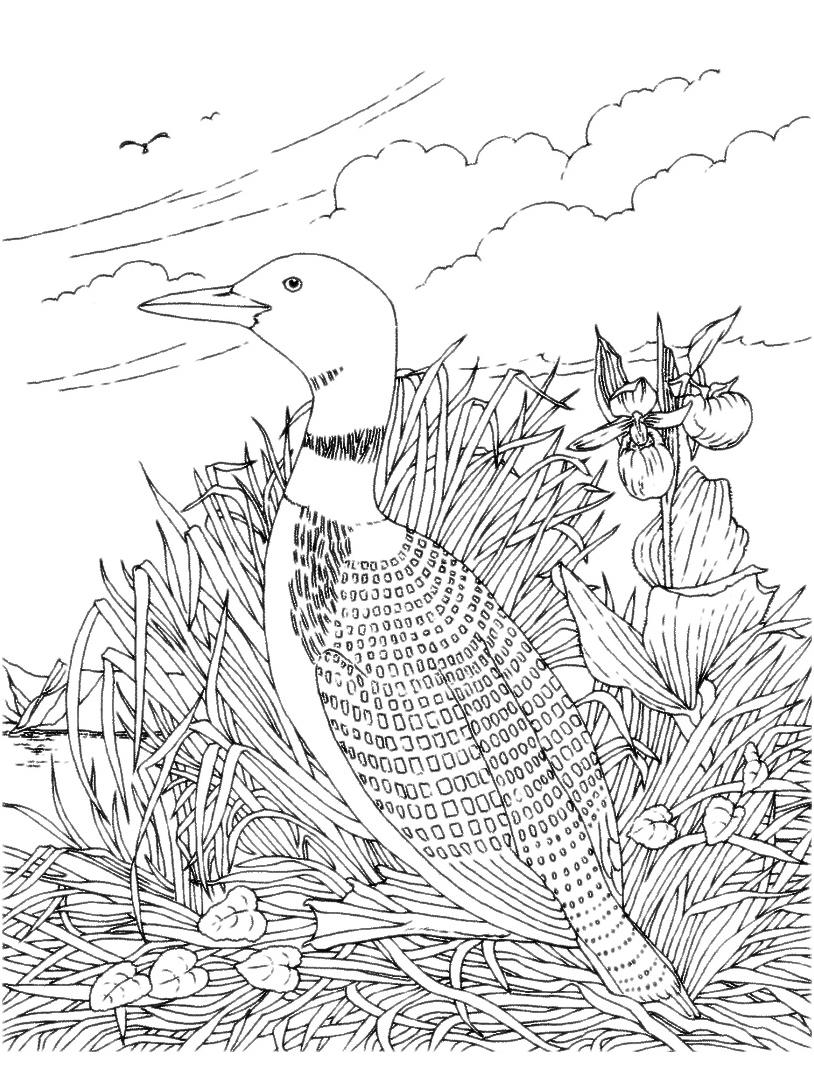 Uccello da colorare 121
