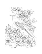 Uccello da colorare 122