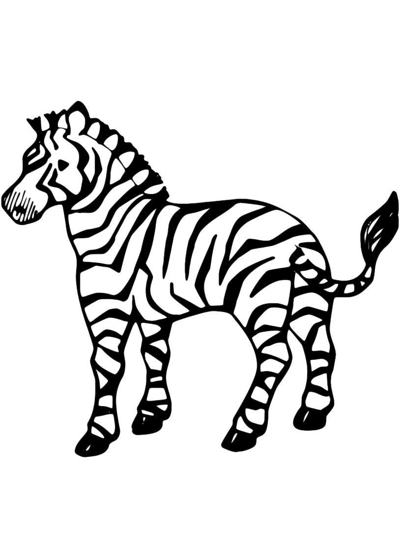 Zebra da colorare 3