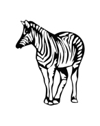 Zebra da colorare 7