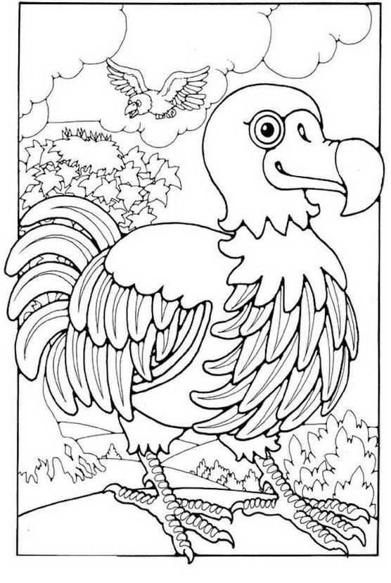 Uccello da colorare 128