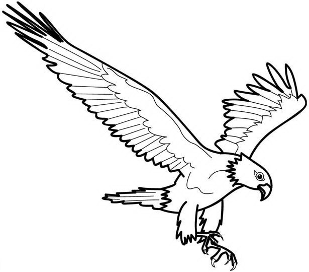 Aquila da colorare 11