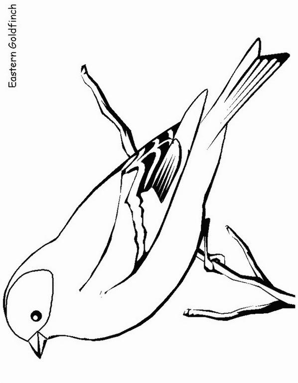 Uccello da colorare 133