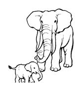 Elefante da colorare 15