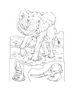 Elefante da colorare 16
