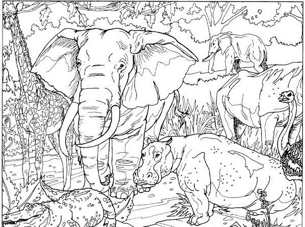 Elefante da colorare 17